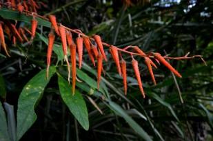 noticias-destacadas/avances-del-proyecto-conservacion-del-bosque-seco-tropical